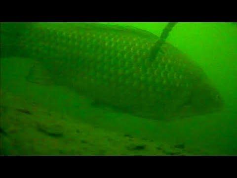 Поведение рыбы под водой зимой. Зимняя рыбалка на карася и карпа