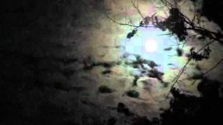 Watch Cowboy Junkies Shining Moon video
