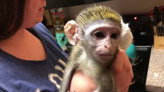 Baby monkey | Preparing Max for Bed