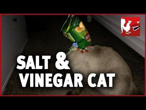 Salt and Vinegar Cat - Happy Hour #19