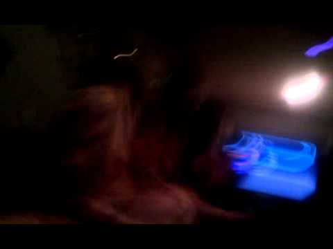 Sleepovers With Snot The Horse! The Transexual Lezbian Wanna-be! video