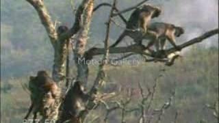 video cassetada pegadinha macaco fdp comedia