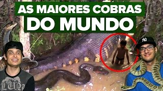 AS MAIORES COBRAS DO MUNDO