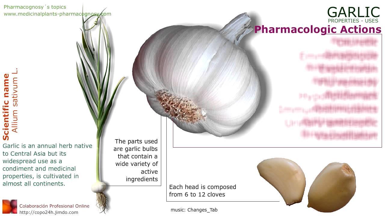 Garlic benefits of plant garlic cloves youtube
