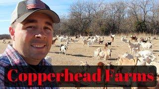 Copperhead Farms Kiko Goats