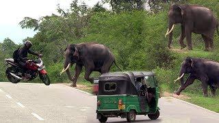 Wild tusker waiting for food at the Udawalawa Road !