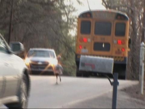 Bold Turkey Blocks Cars, Buses on N.C. Road