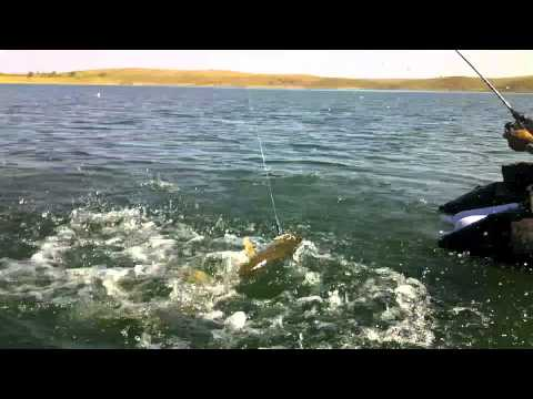 Gros Brochet et Black bass Extremadura pro Fishing 2012