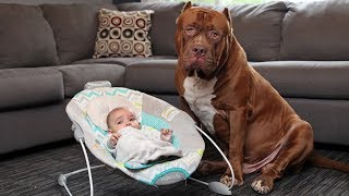Amazing Dogs Meet Newborn Babies First Time | Dog Love Baby Video Compilation