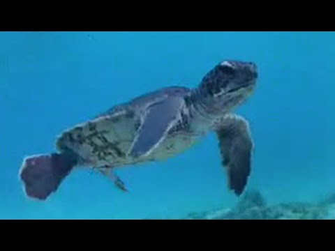 Supernatural powers of ocean animals - BBC