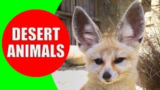 Desert Animals for Children - Desert Animal Sounds for Kids to Learn - Fennec Fox, Camel & Coyote