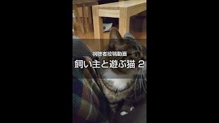 飼い主と遊ぶ猫2