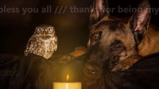 BEAUTIFUL FRIENDSHIP BETWEEN DOG AND OWL