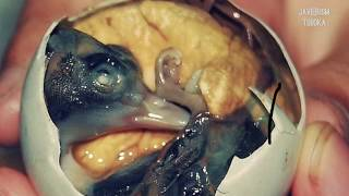 BALUT A PHILIPPINE DELICACY: US ARMY DARES TO EAT!!! #balutphilippines
