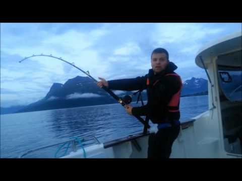 Greenland shark fishing at Andorja