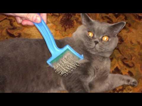 Как расчесать кота? Опасная практика, будьте осторожны!