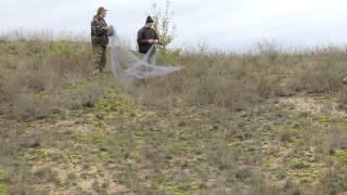 видео ловли перепелов