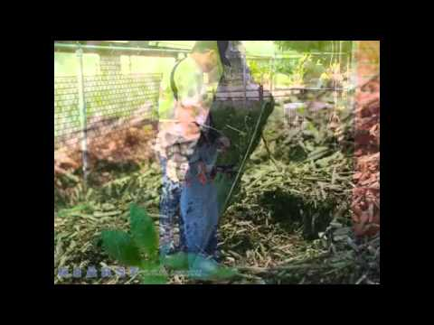 Singletary's Lawn Care and Landscaping Ochlocknee GA 31773