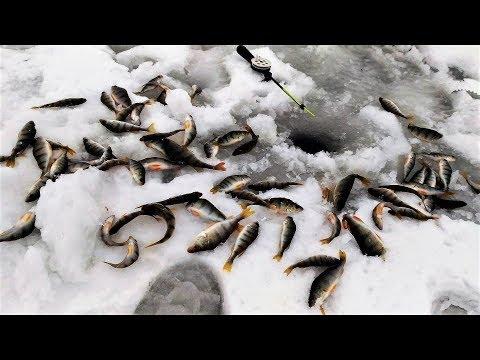 Нашёл волшебную лунку!!! Устала рука. Зимняя рыбалка 2018.