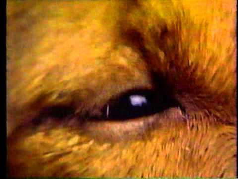 Sesame Street - Look A Little Closer