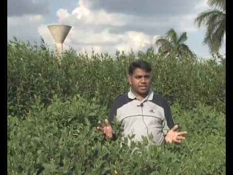 Cracking the Pigeonpea Genome
