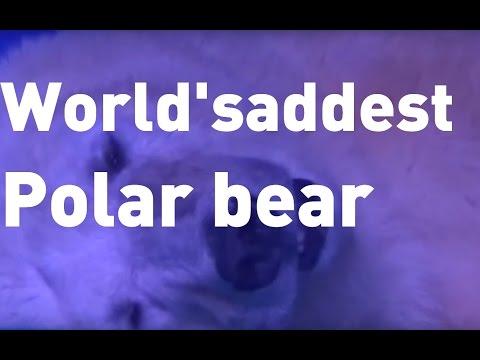 'World's saddest polar bear' in Chinese shopping centre