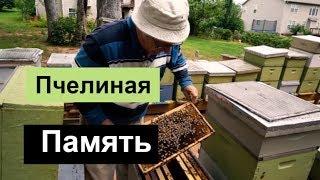 пчеловодство для начинающих -№99 Пчелиная Память. Обмен опытом.