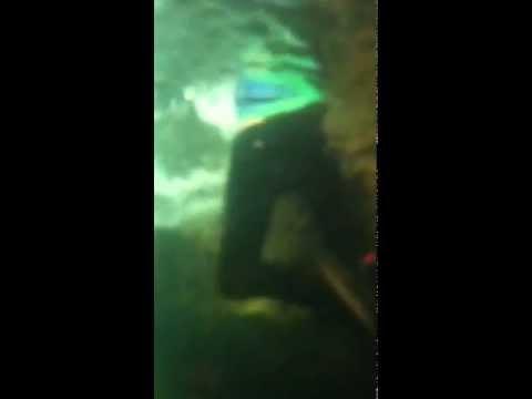 Woman falls in at aquarium