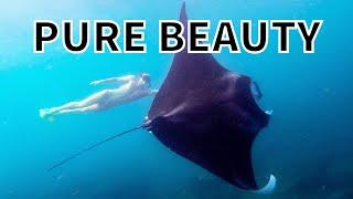 Видео о подводной охоте 2015