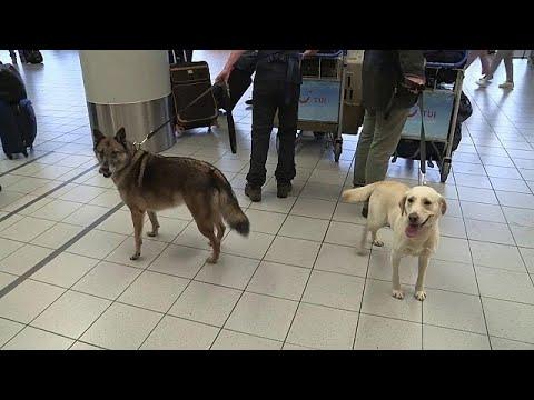 Deze honden gaan Joey zoeken