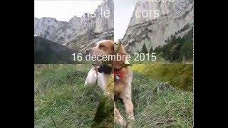 Chasse à la bécasse  dans le Vercors - 16 décembre 2015