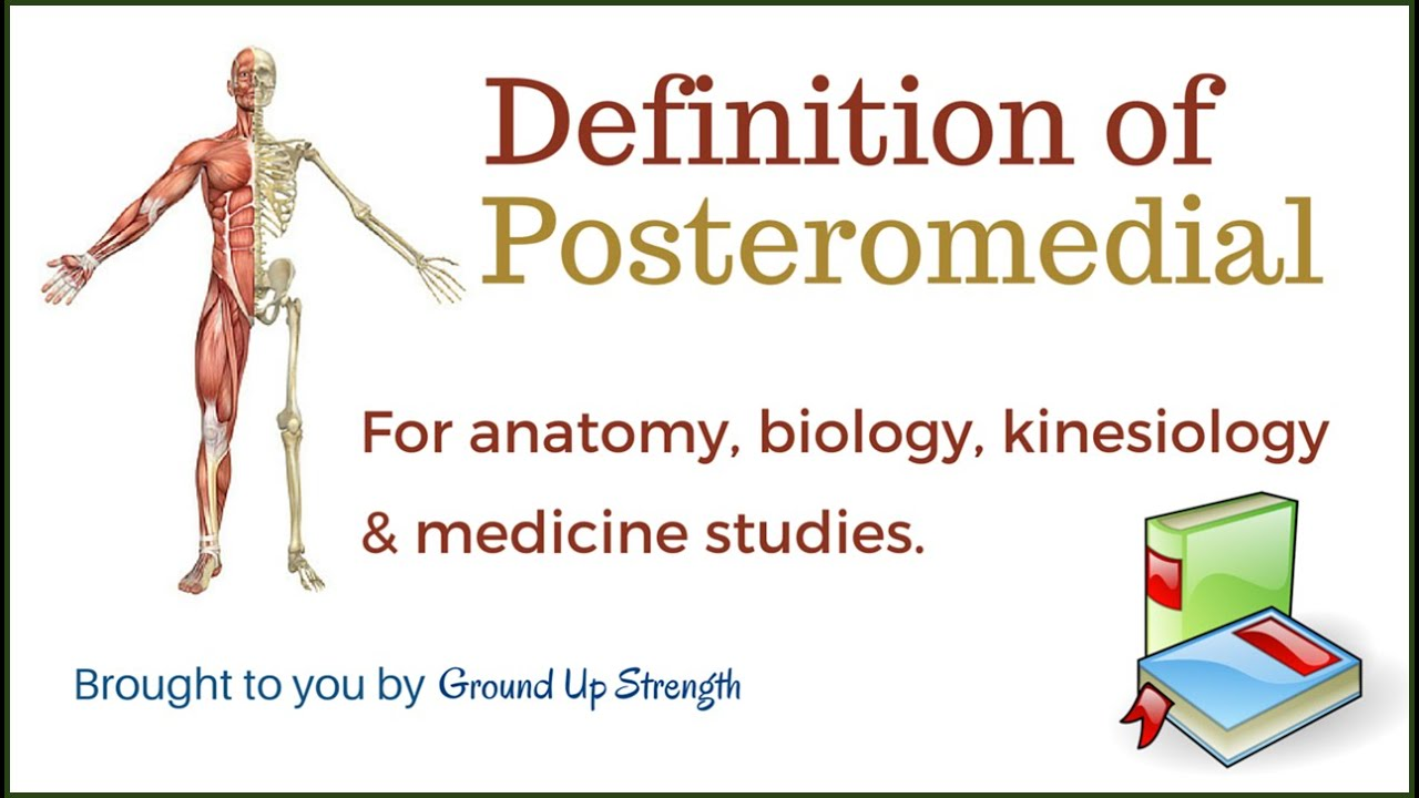 Anatomy terms and definitions 7499401 - follow4more.info