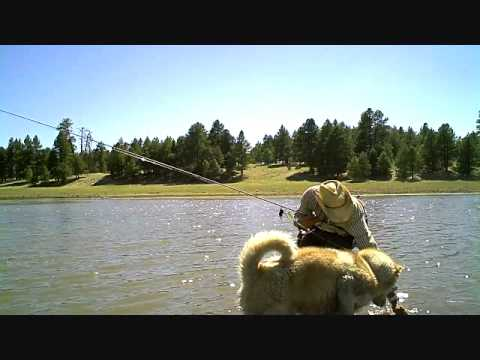 Flyfishing Catfish At Lake Mary Youtube