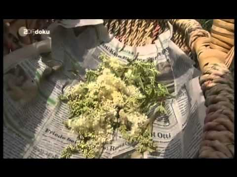 Bedrohte Pflanzenmedizin.avi