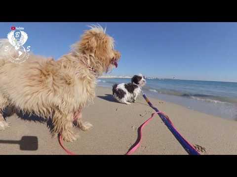 Vlog 07: Begleitet uns auf unserer Spanien Reise 2018 - 2019