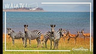 Teaser reportage Croisière Safari Afrique Australe