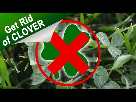 How To Get Rid Of Clover In Your Lawn