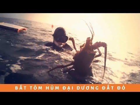 Bắt tôm hùm đại dương California đắt đỏ nhất thế giới...