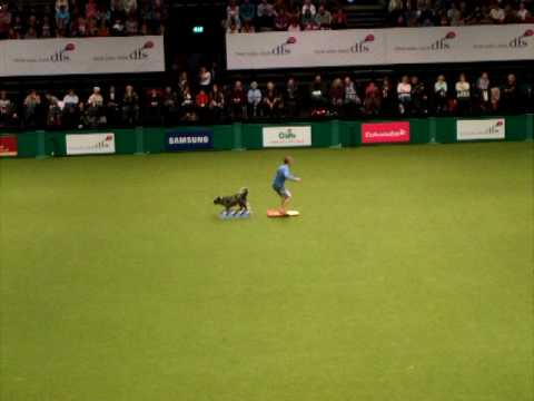 DFS Crufts 2010 Freestyle  richard curtis