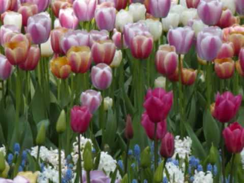 Springtime in Holland at Keukenhof ...