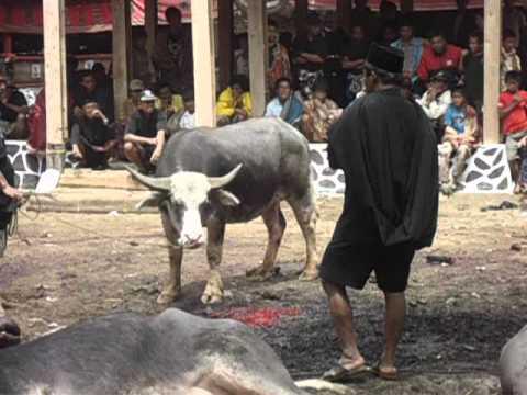 Adat Toraja