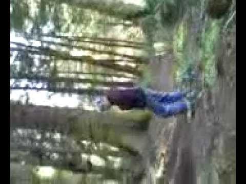 Clayton MacDonald gets owned by a tree!
