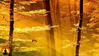 Yoga Meditation Music Relaxing Music Music For Stress Relief Soft Music Background Music 3489