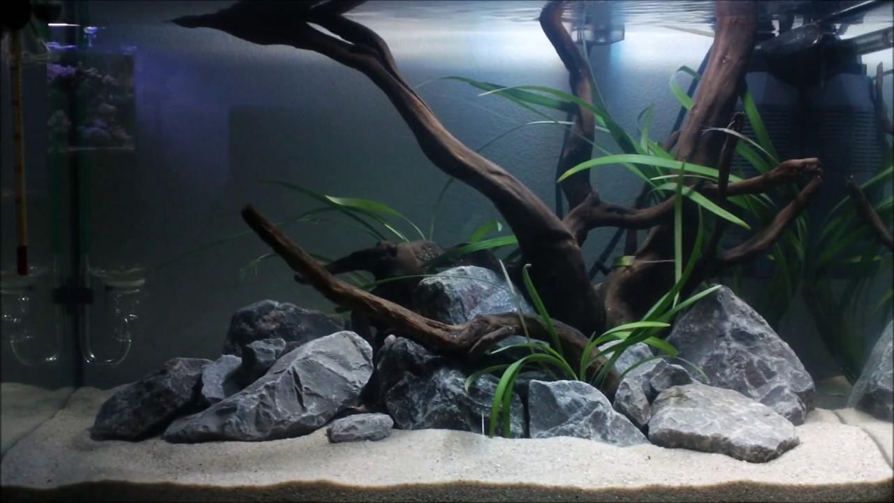 Hardscape Quot Still Life Quot Aquarium 54 L 14 Gallon Tank Youtube