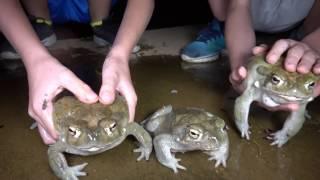 4K Ep2. Dragons Of The West & Crazy Featherd Frogs Jump Poor Bird. Travel Herping Fishing Fun.