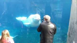 Dancing beluga!
