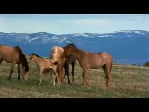 Los mustang son los caballos salvajes (en realidad, caballos ...