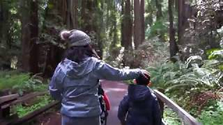 Muir Woods Family Trip
