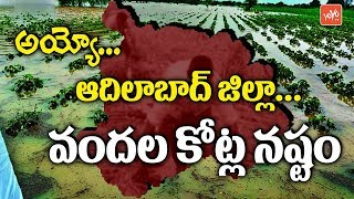 Telangana News - Huge Crop Loss in Adilabad District Due to Heavy Rains