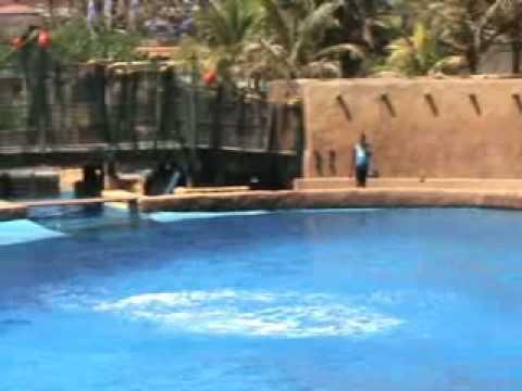 Dolphin performance Ushaka Sea World.wmv